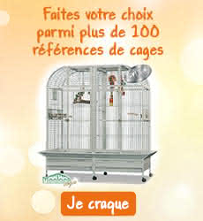 Cages perruches